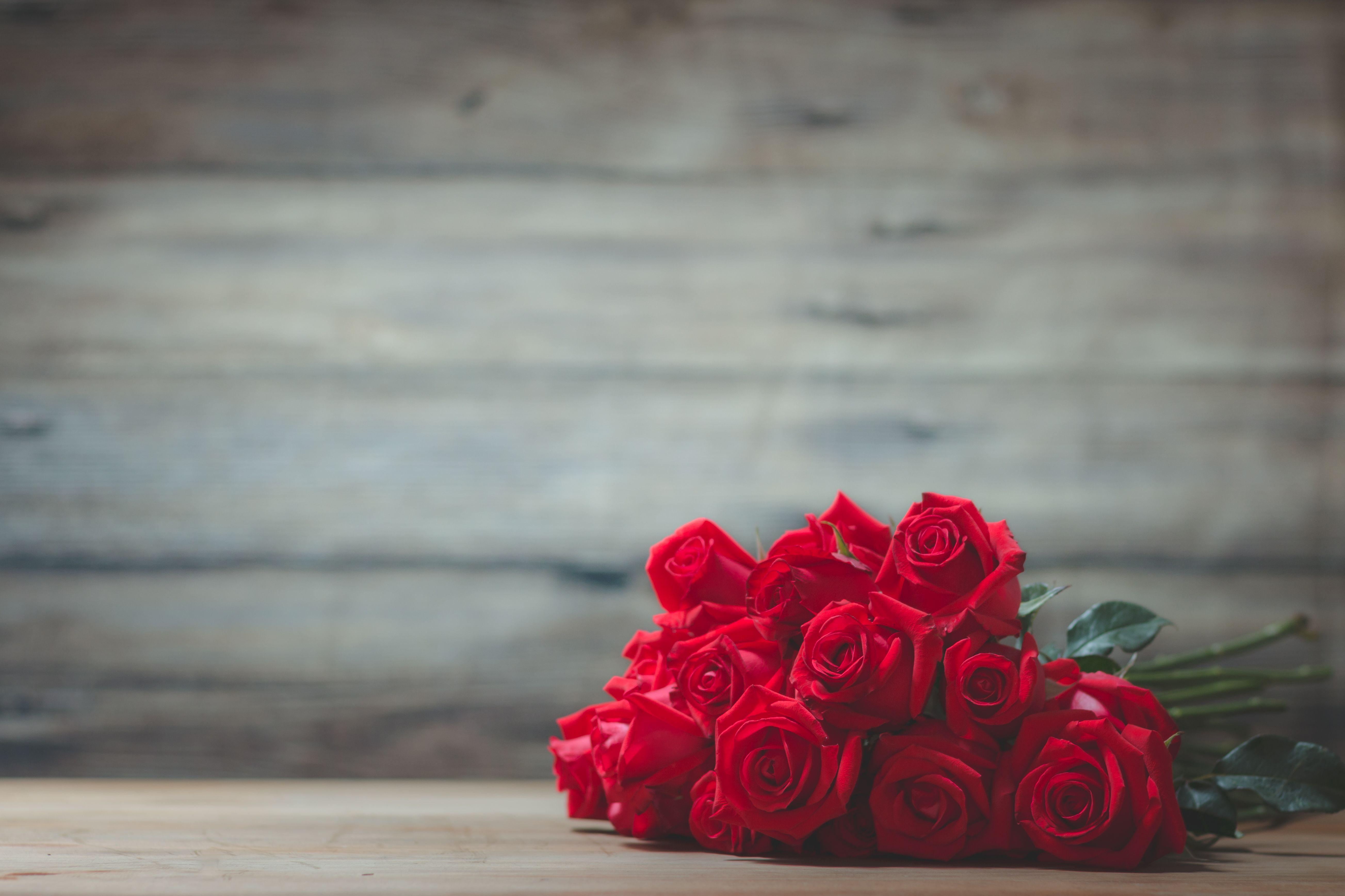 Valentinsdag med rød rose på trebakgrunn