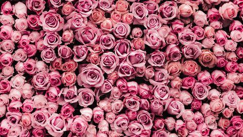 ピンクのバラバレンタインデーズーム背景