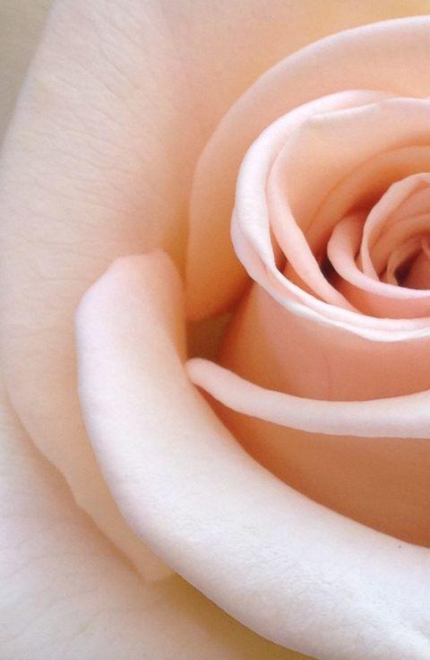 10 profumi donna rosa novità Primavera 2020