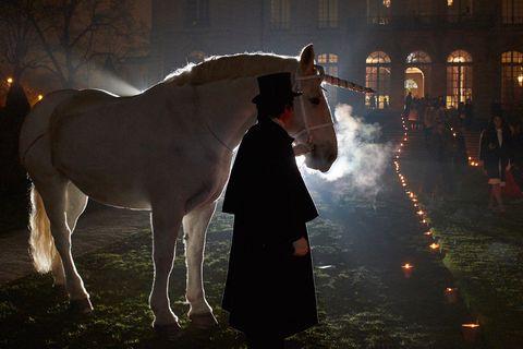 Horse supplies, Bridle, Halter, Horse, Working animal, Horse tack, Liver, Midnight, Rein, Livestock,