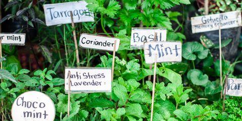 variety of herbs in the garden