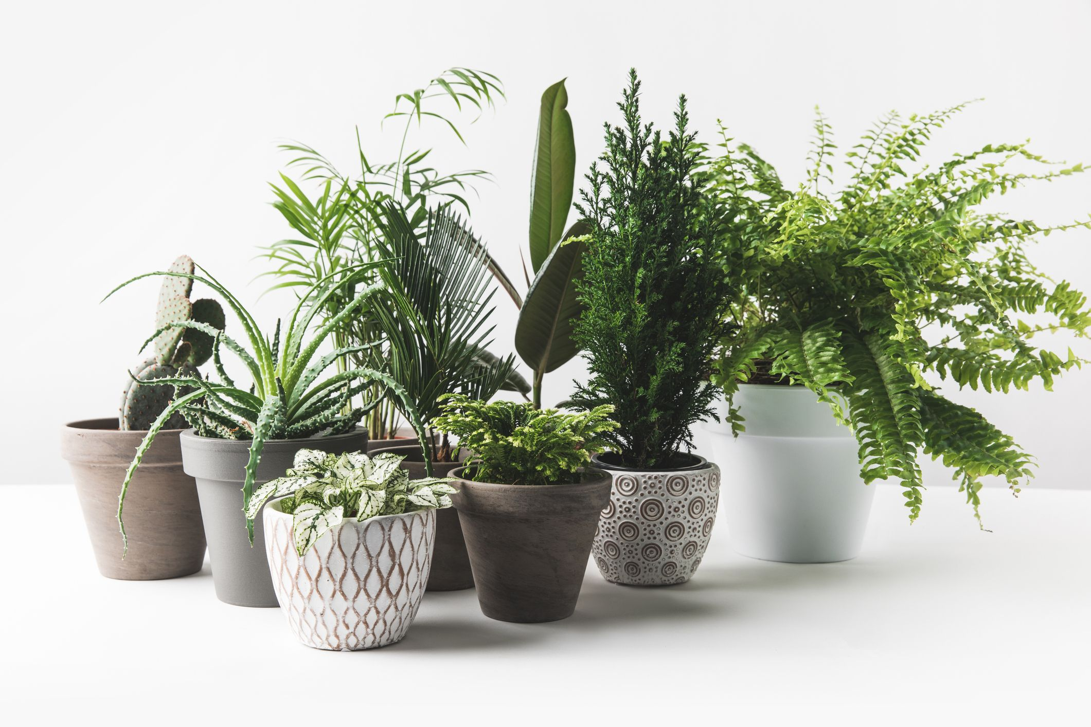 House Beautiful & 7 mistakes you\u0027re making with your houseplants