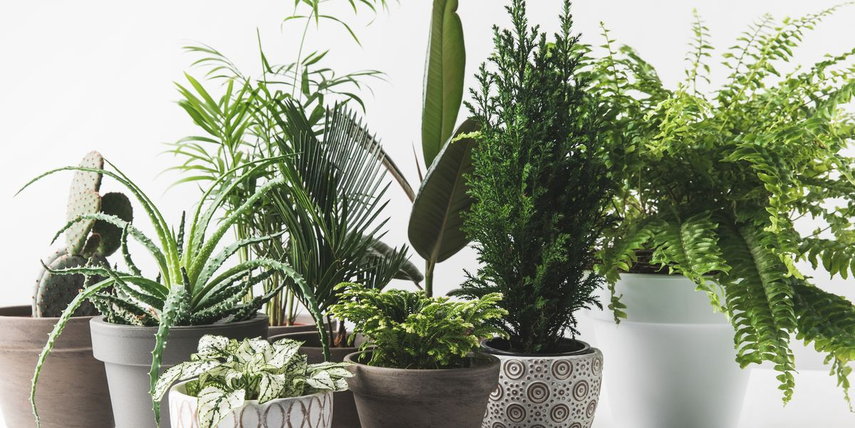 Image result for household plants