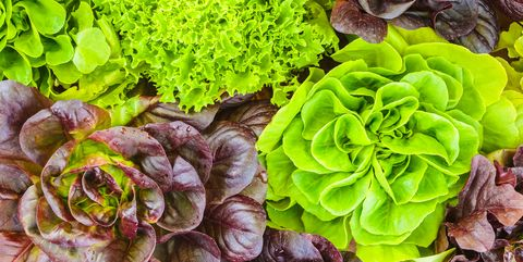 Types Of Lettuce Different Varieties Of Lettuce