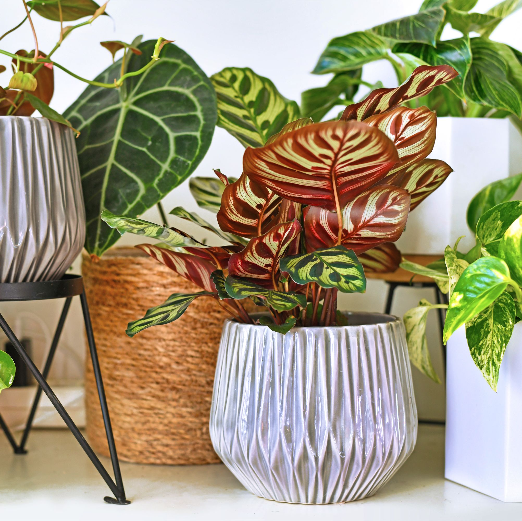 The Best Places to Order Plants Online