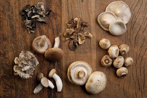 Various mushrooms used on cooking