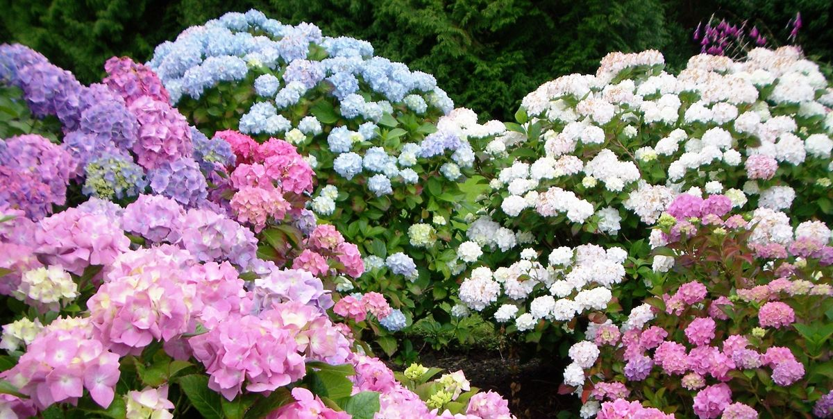 20 Beautiful Perennials That'll Bloom in Your Garden Year After Year