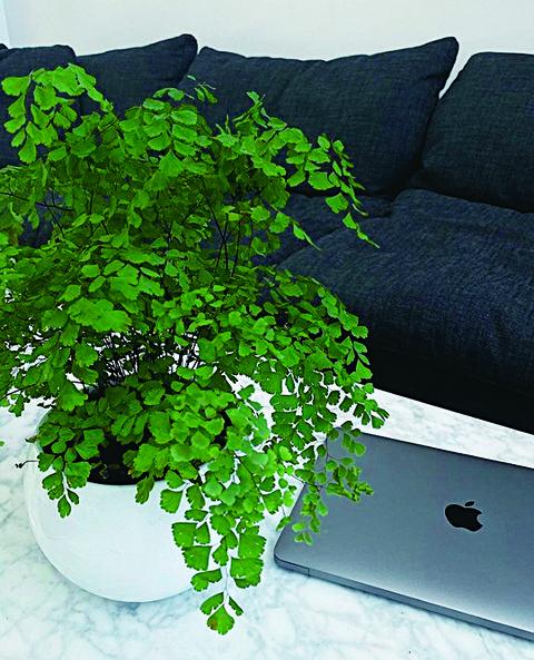 植物とパソコン