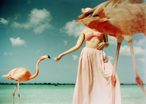 Greater flamingo, Flamingo, Pink, Bird, Water bird, Water, Sky, Illustration, Adaptation, Stock photography,