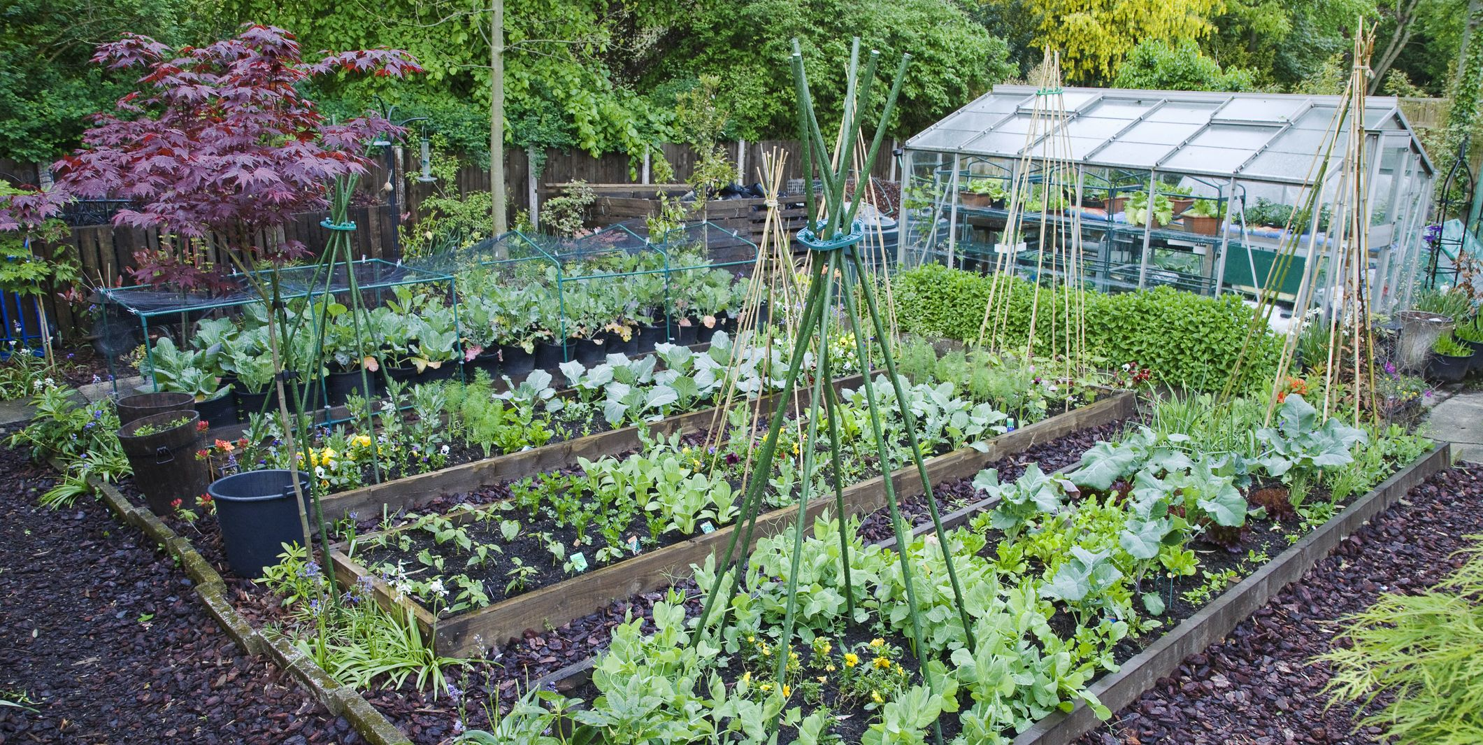 The 6 most cost-effective vegetables to grow in your garden