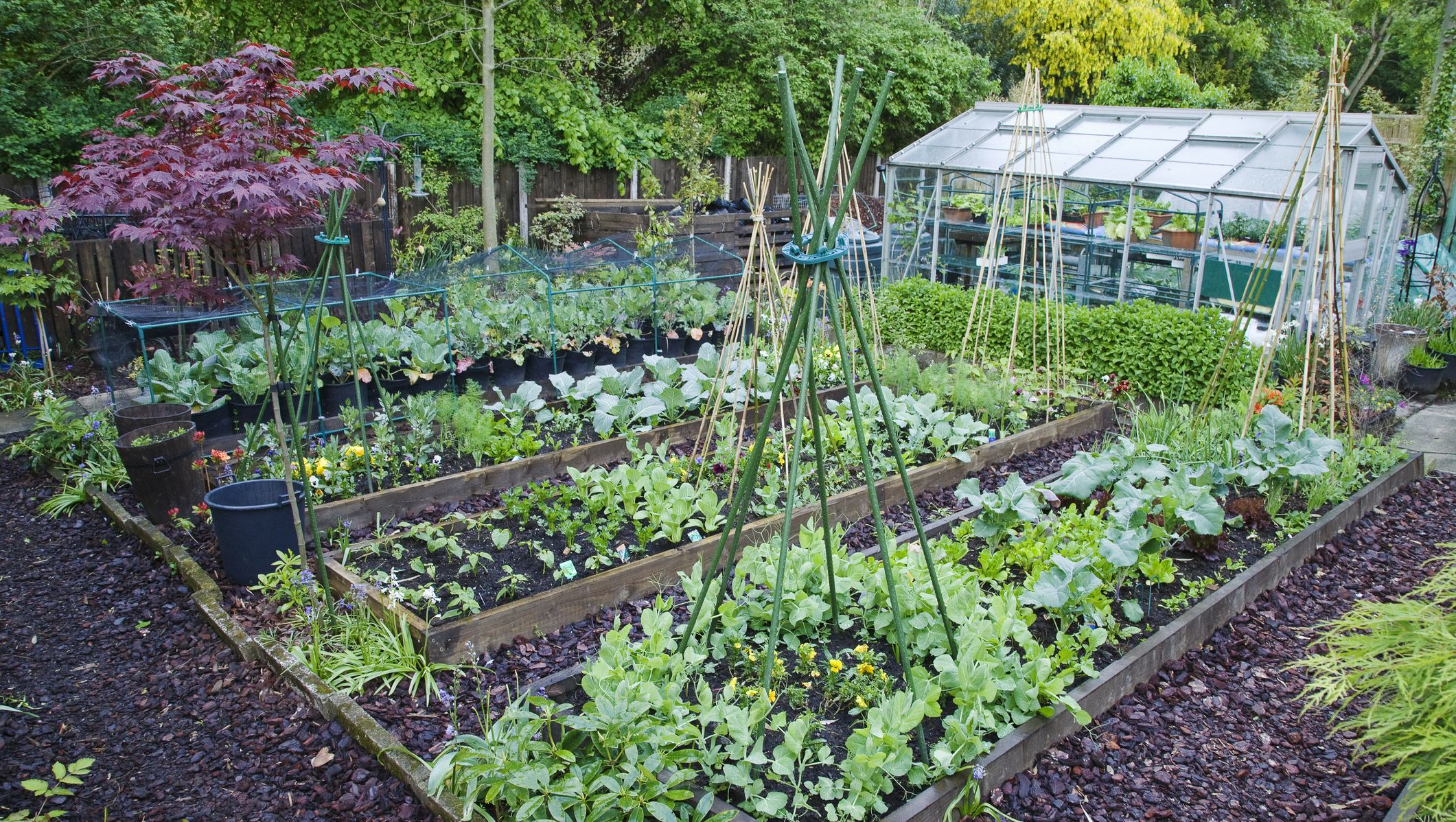 Image Result For How To Start A Garden From Scratch Uk