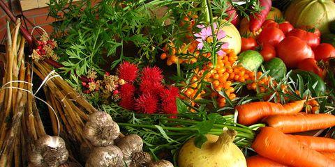 VegetableExtravaganza