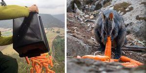 オーストリアの森林火災で生き残った動物たち