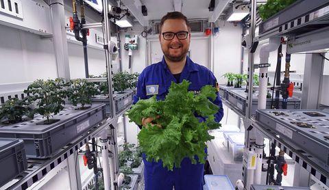 Plant, Herb, Flower, Vegetable, Leaf vegetable, Houseplant,