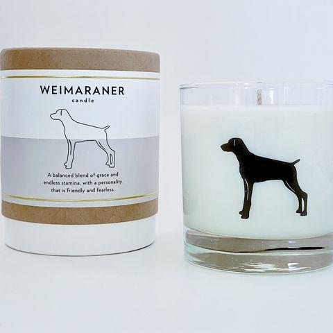 Vela aromática inspirada en la raza braco de Weimar