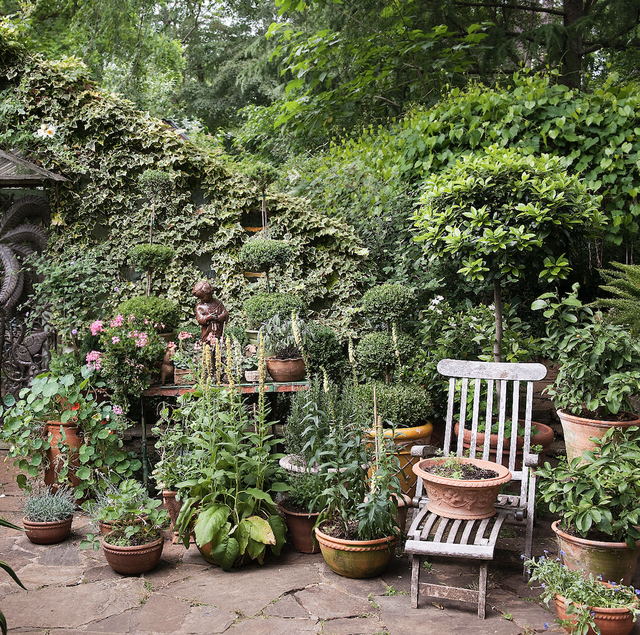 Vegetation, Garden, Botanical garden, Botany, Tree, Plant, Shrub, House, Yard, Flower,