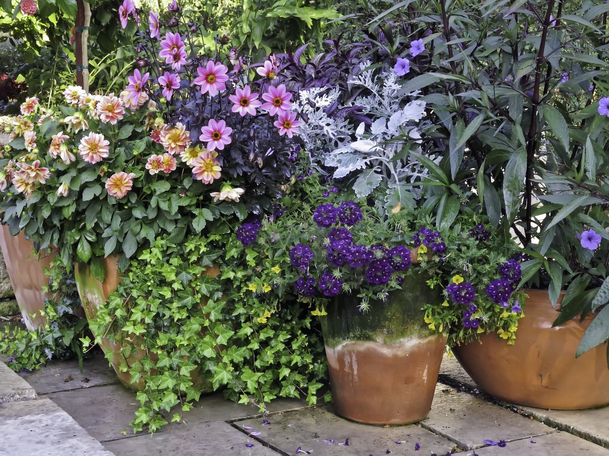 Container Gardening Care