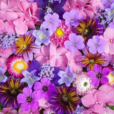 vibrant mixture of summer garden flowers