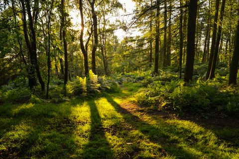 What is forest bathing? Here are 6 places in the UK to try the Japanese practice of forest bathing
