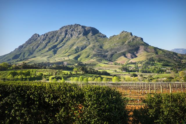 vineyards and mountains around franschhoek, south africa