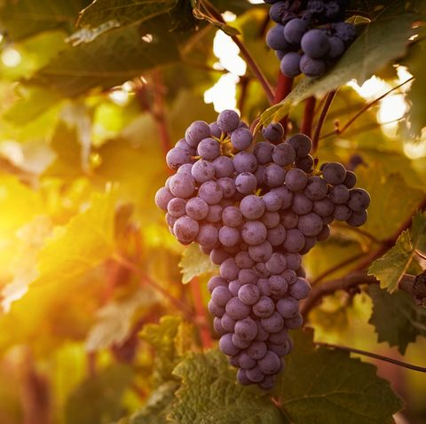 is grapes good for diet