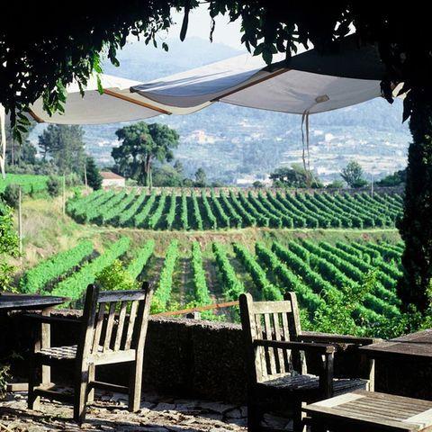 Plantation, Hill station, Leaf, Tree, Shade, Rural area, Plant, Building, Landscape, Leisure,