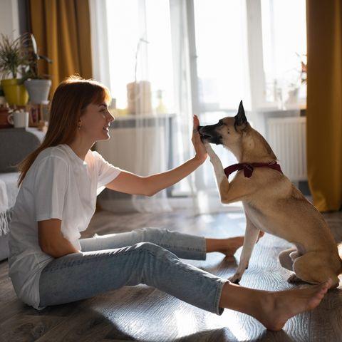 virtual dog training lead