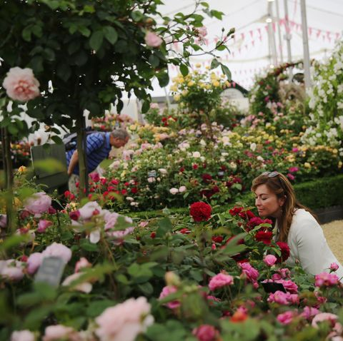 Preview Of The Hampton Court Flower Show