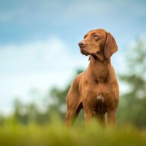 la science de la façon dont les chiens perdus retrouvent le chemin de la maison