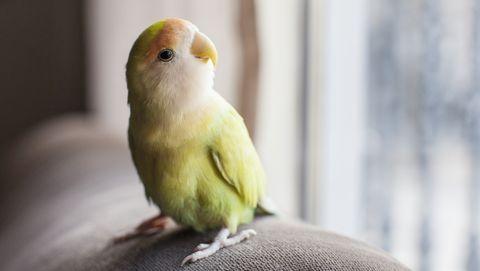 Schattig vogeltje kijkt uit het raam
