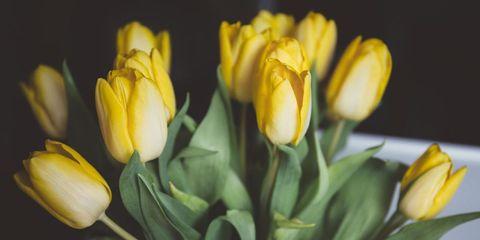 Flower, Flowering plant, Yellow, Petal, Plant, Tulip, Close-up, lady tulip, Bud, Botany,