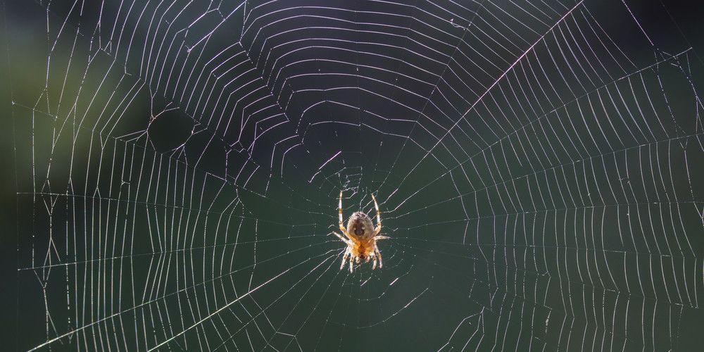 spinnen-hangen-ondersteboven