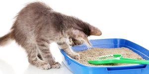 Daarom begraaft jouw kat zijn poep.