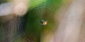 meer-spinnenwebben-herfst