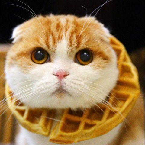 waffles - animals to follow on instagram