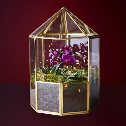 waitrose  christmas orchid terrarium