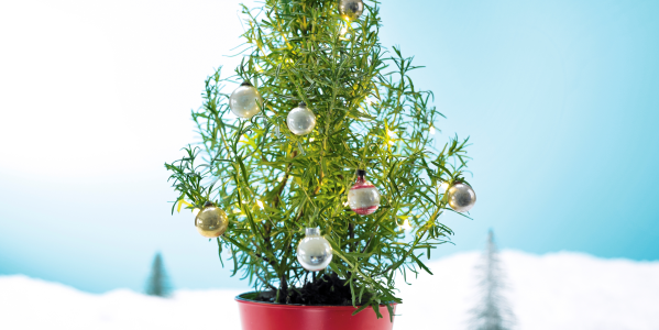 Waitrose Is Selling Rosemary Christmas Trees And They're