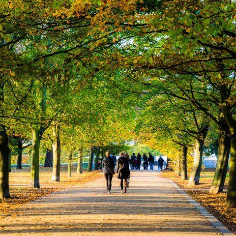 Walk in a local park