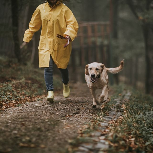 dog's trust advice on keeping pets safe in flooding