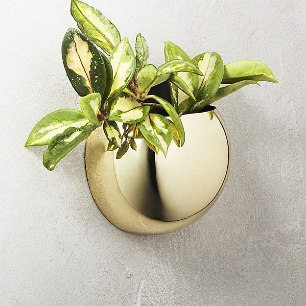 The Best Wall Planters For Outdoor And Indoor House Plants Planter
