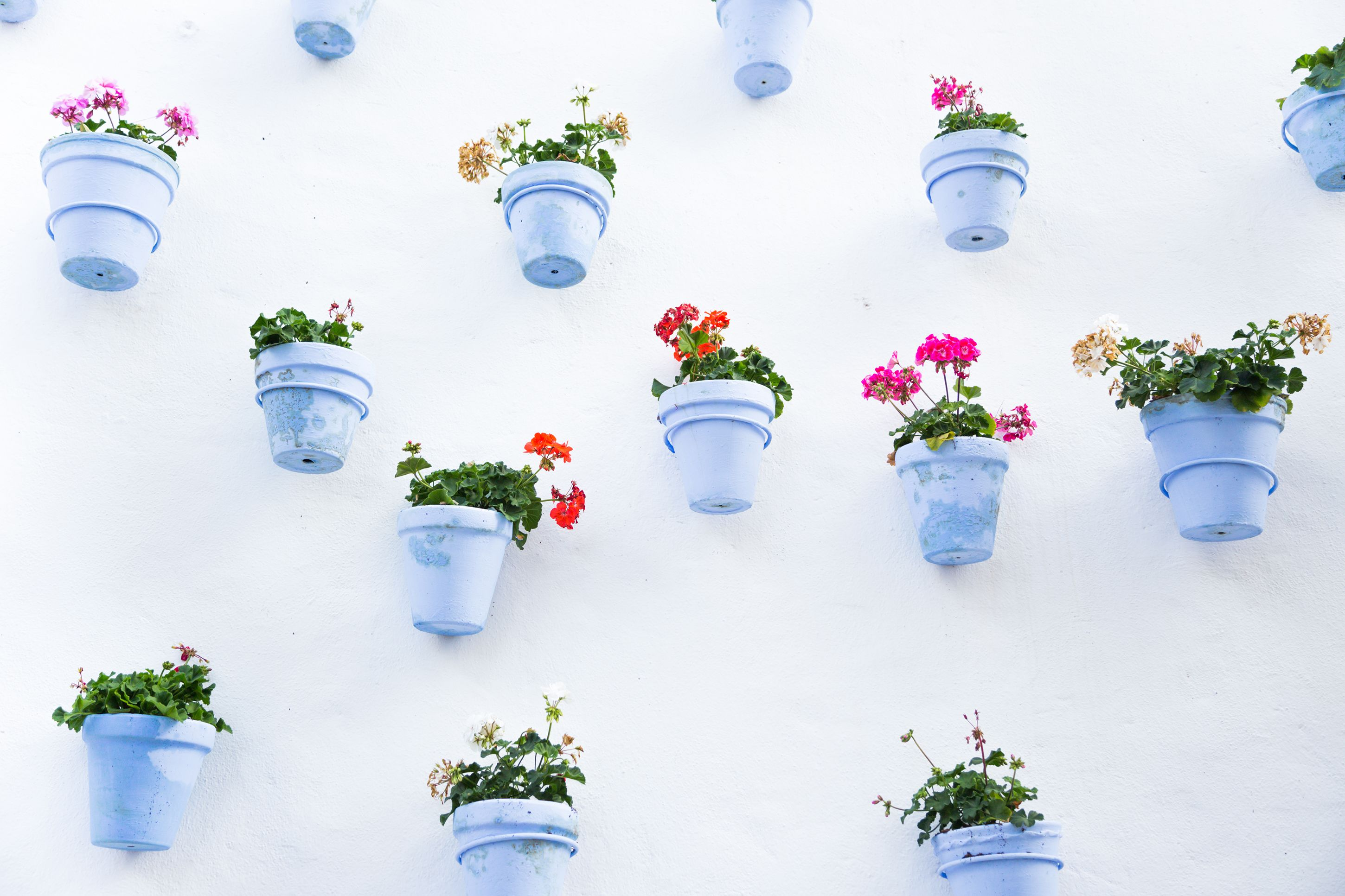 The Best Wall Planters For Outdoor And Indoor House Plants — Planter ...