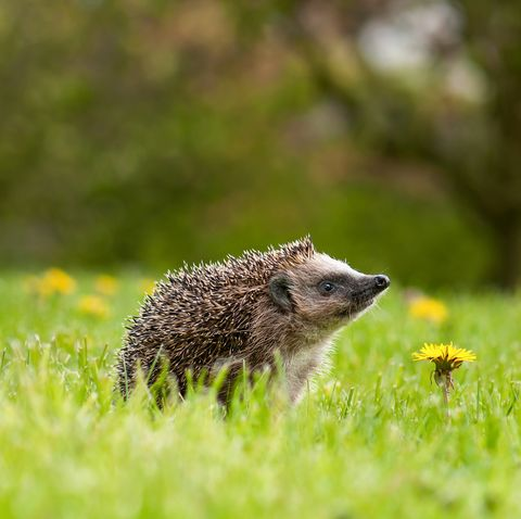 What the warm weather means for wildlife