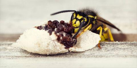 Wasp on food