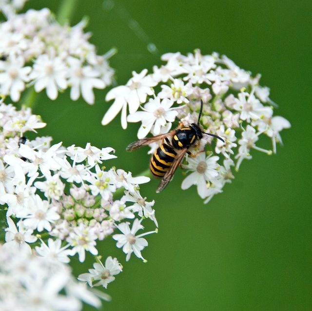 wasp infestation boom expected this summer, warn the experts
