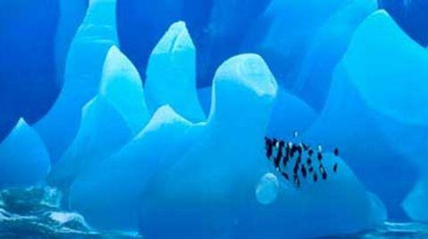 zuidpool-pinguïns