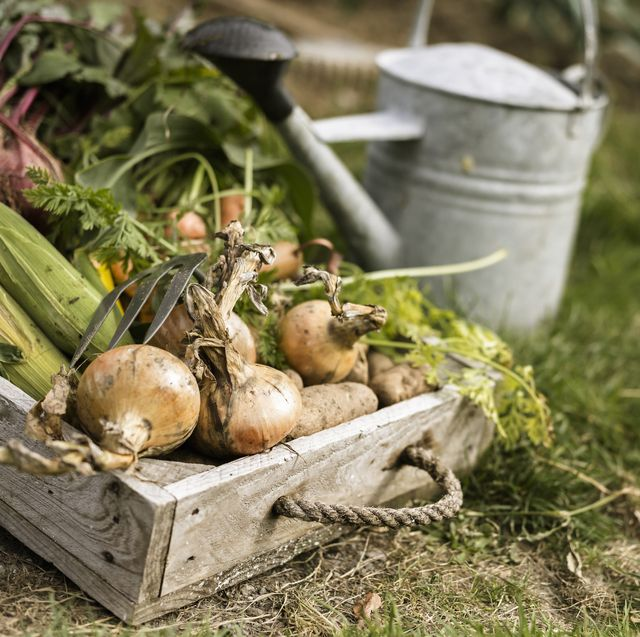 allotments for beginners 6 steps to starting your own allotment garden