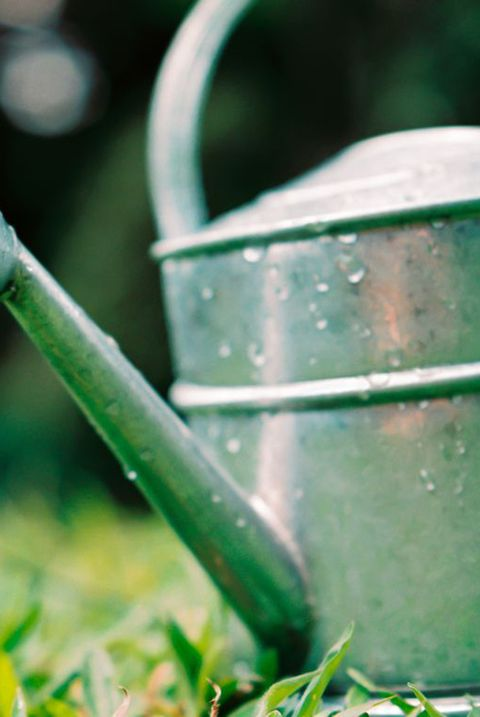 single water droplet falling from watering can on the grass