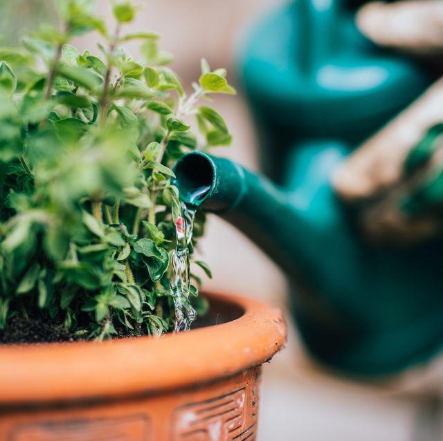 jardinería herramientas