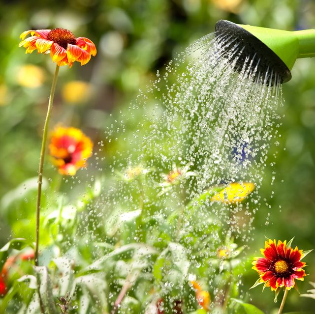 a gardener's guide to saving water 6 tips to help you get started