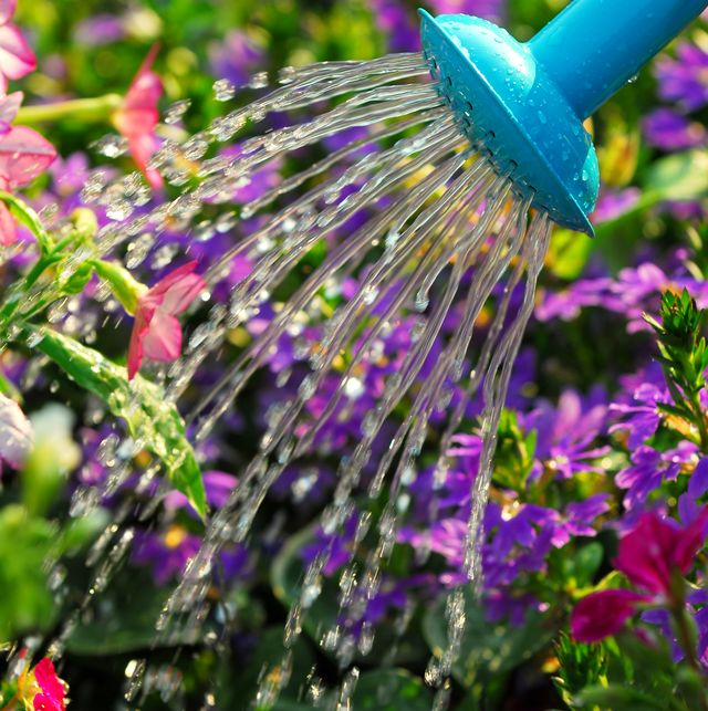 gardeners urged to switch from 'mains to rains' to reduce water usage